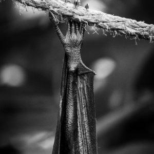 Abhängen